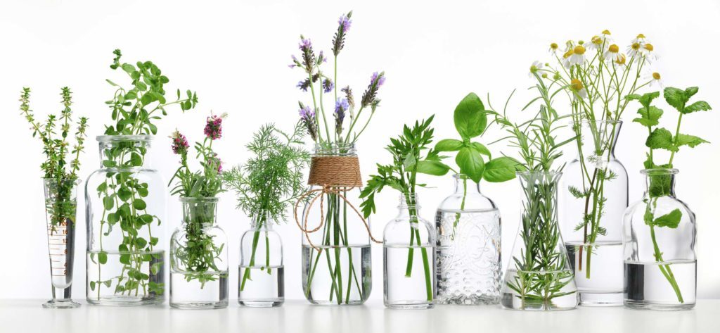 Plants in bottles